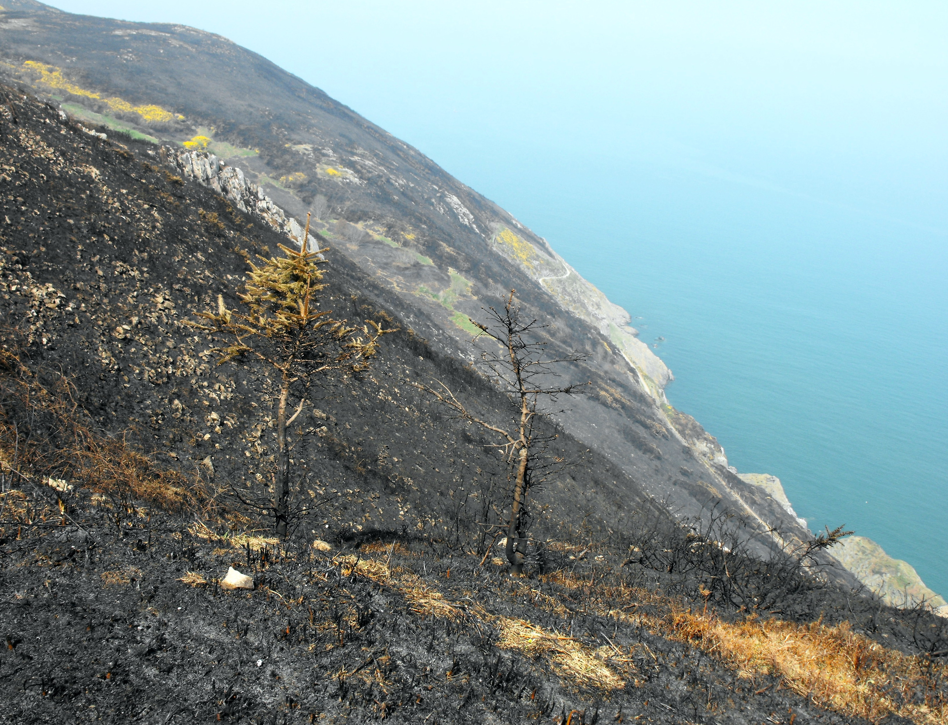 Bray greystones co wicklow council investigate cause of cliff walk fire that destroyed hundred - Intire decrution ...